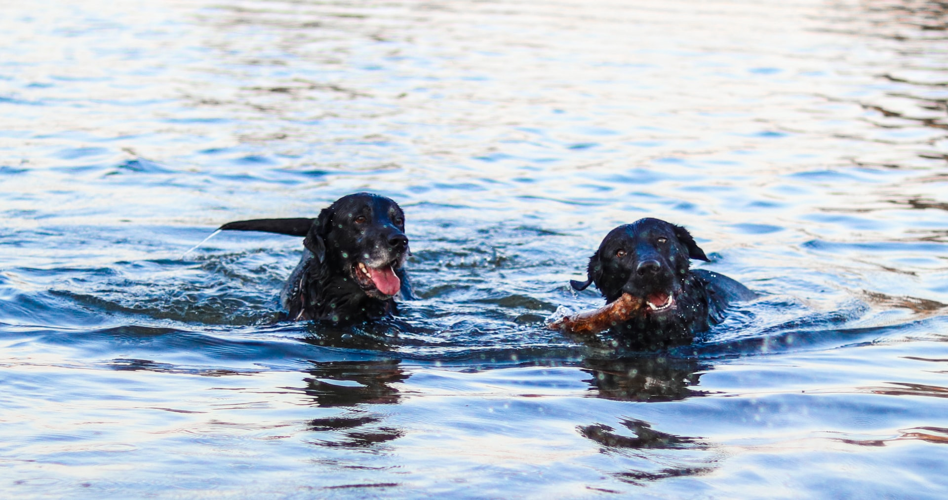 Is Seaweed Bad For Dogs